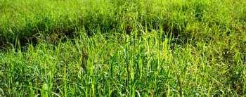 Conheça mais sobre o Programa de Produção Integrada de Sistemas Agropecuários – PISA